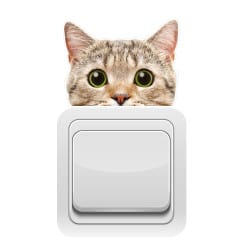 STICKER INTERRUPTEUR CURIOUS CAT (INTERR022)