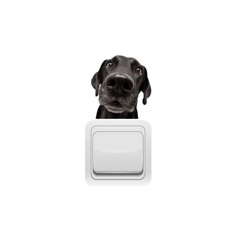 STICKER INTERRUPTEUR CURIOUS DOG (INTERR023)