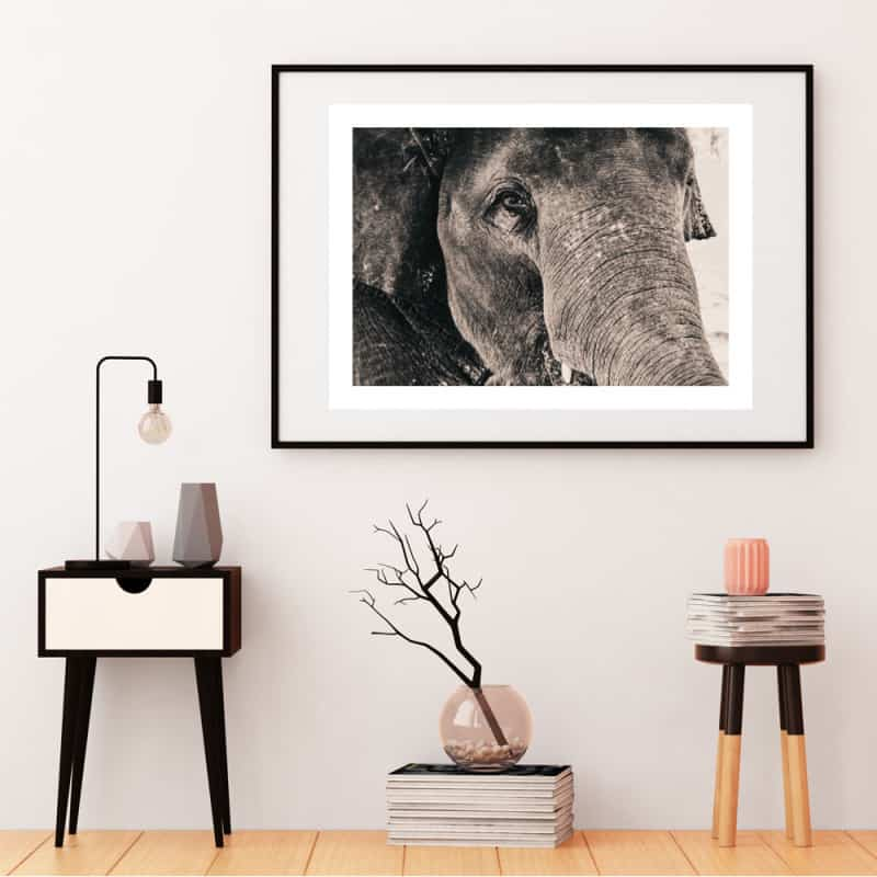 POSTER ELEPHANT SEPIA (POST0031)