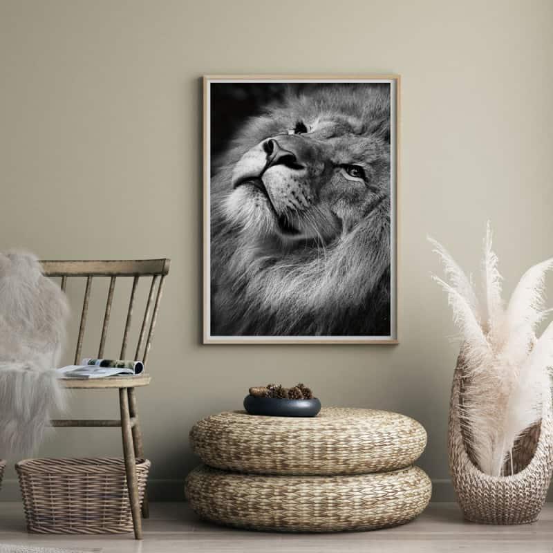 POSTER LION CRINIERE (POST0035)