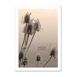 POSTER WINTER SEPIA (POST0049)