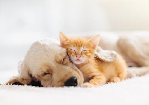 Cadeau pour animaux de compagnie